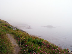 Clear Path, Foggy Sea