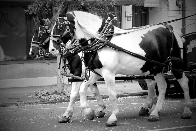 Charleston Transportation