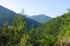 Olympic_National_Forest_Rd_27.JPG