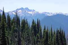 Deer Park Road Olympic National Park.JPG