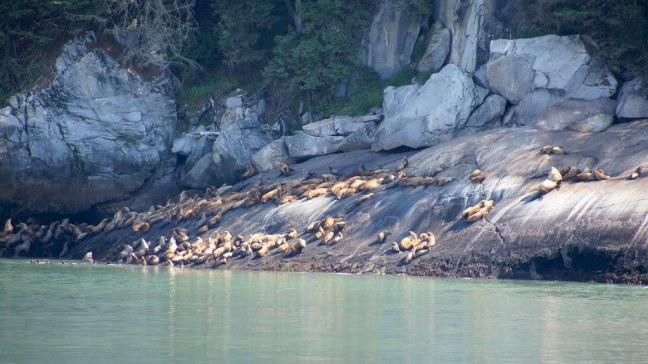 Sea lions on Inside Passage