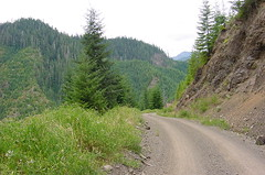 Olympic National Forest Rd 23.JPG