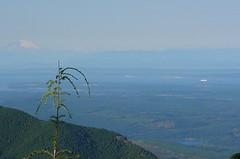 Olympic National Forest Rd 27-210 Quilcene Range.JPG
