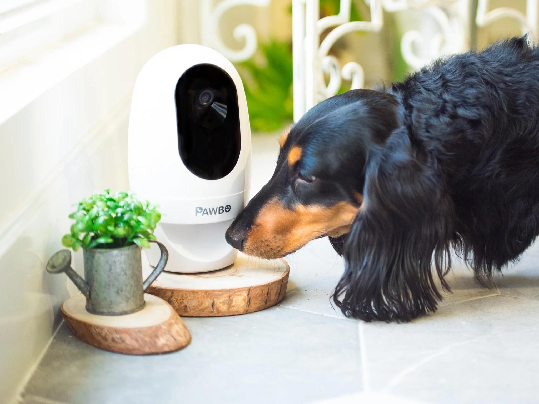 Fullsize Of Best Indoor Dogs