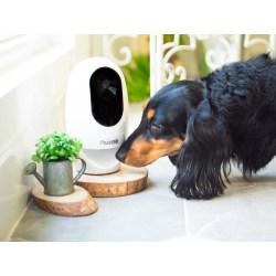 Small Crop Of Best Indoor Dogs