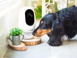 Small Of Best Indoor Dogs
