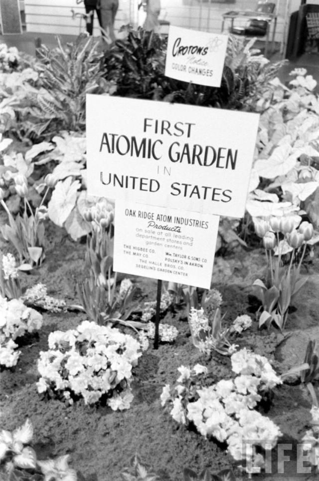 atomicgarden1