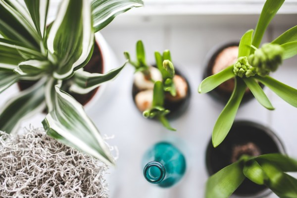 Top view of houseplants on white background