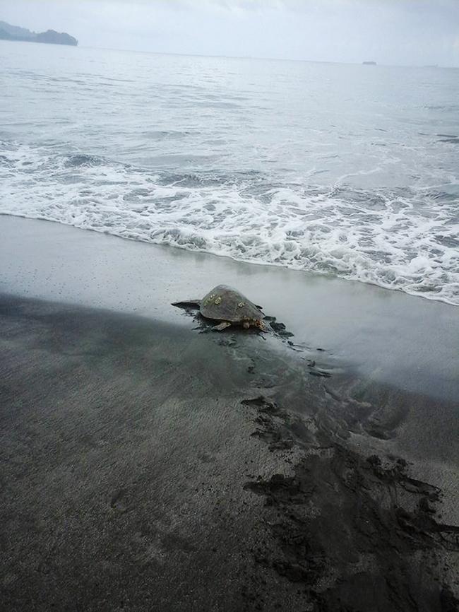 tartarugas-mar-3