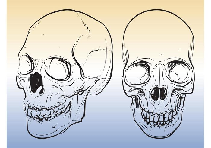 Skull Sketches   Download Free Vector Art  Stock Graphics   Images Skull Sketches