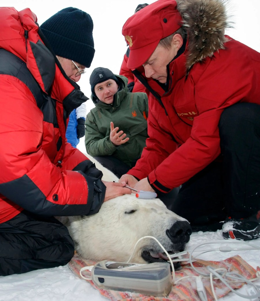 He's also shot a polar bear for science. This allowed researchers to tag and track the arctic bear.