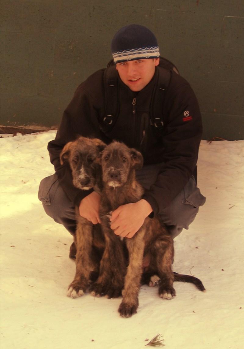 Large Of Irish Wolfhound Rescue