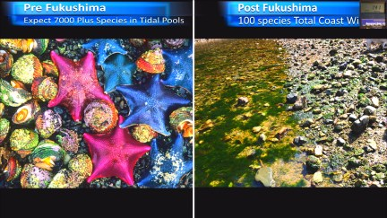 Fukushima Story 256.jpg