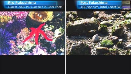 Fukushima Story 266.jpg
