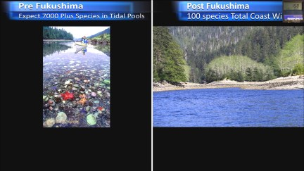 Fukushima Story 273.jpg