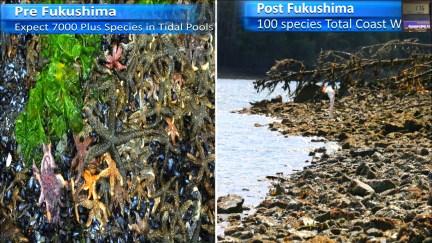 Fukushima Story 329.jpg
