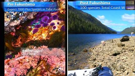 Fukushima Story 330.jpg
