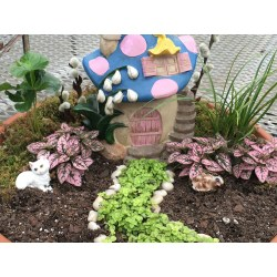 Modish A Guide To Making A Fairy Garden A Guide To Making A Fairy Garden Greenhouse Fairy Garden Book Fairy Garden Store garden The Fairy Gardens