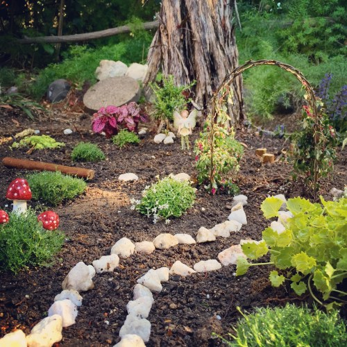 Medium Of Natural Fairy Garden
