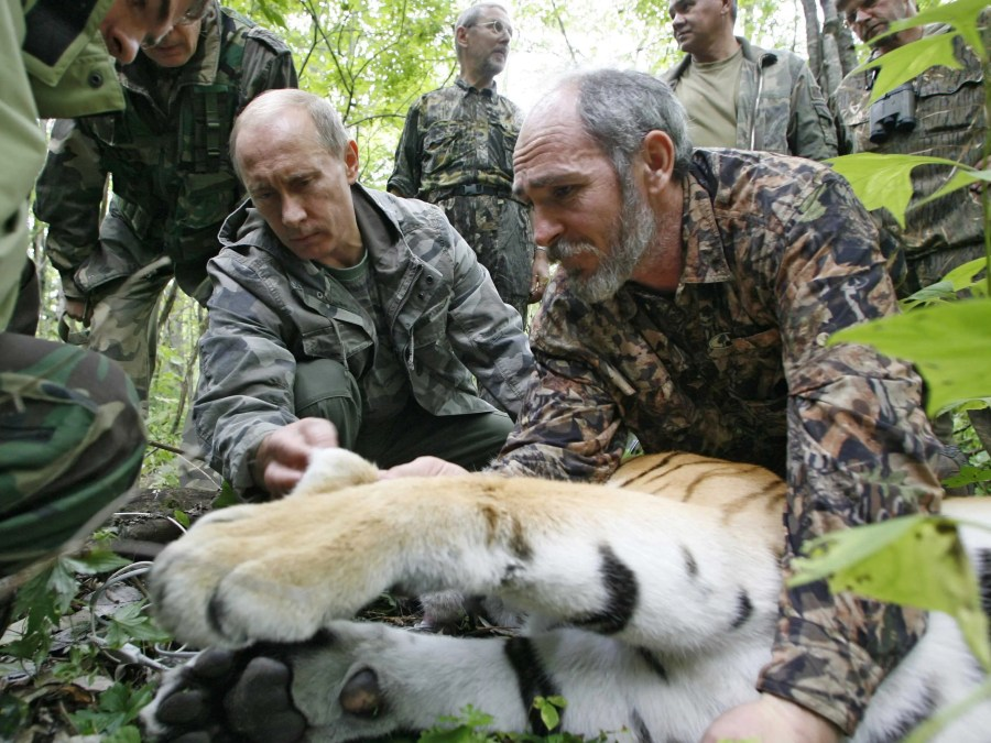 He shot a tiger with a tranquilizer dart, which allowed the researchers to tag the big cat with a satellite tracker.