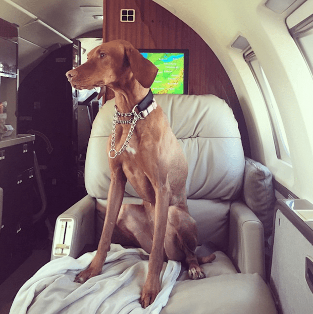 Even their dogs fly first class.