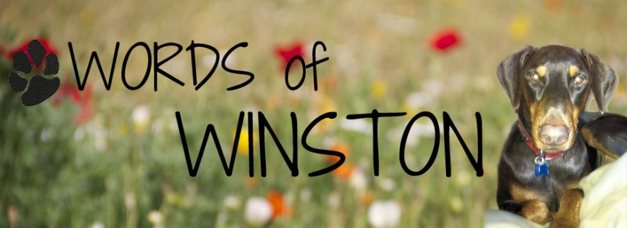Words Of Winston Blog