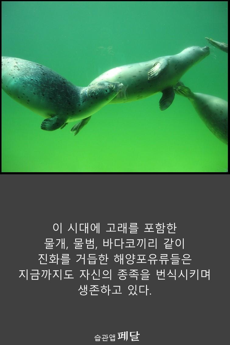 whale_14