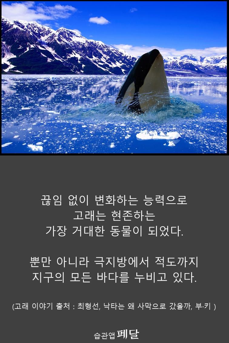whale_16