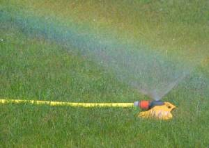 Top Tips To Water Your Lawn