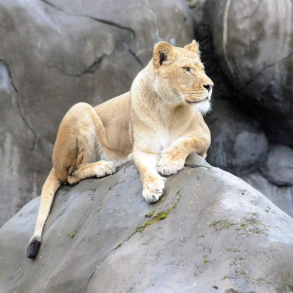 Oregon Zoo 4-6-2014