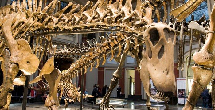 Museums - Dinosaurs