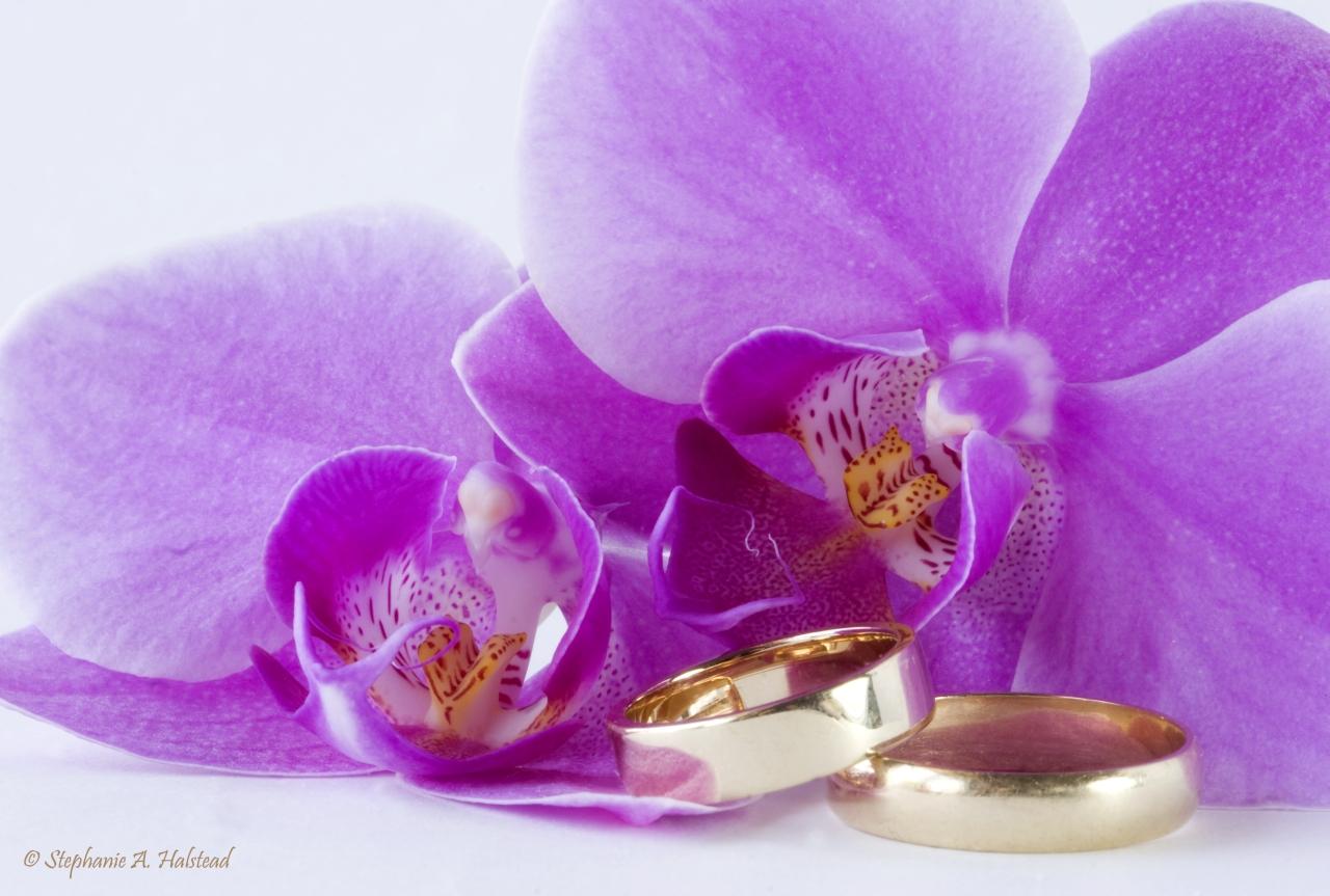 pictures of wedding rings purple wedding rings orchids and wedding rings wedding image of orchids and rings purple orchids with