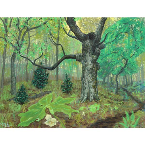 Mayapples on the Appalachian Trail, a pastel painting by Stephanie Thomas Berry
