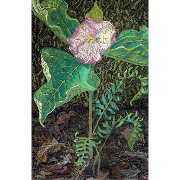 Trillium Shaman, a pastel painting by Stephanie Thomas Berry