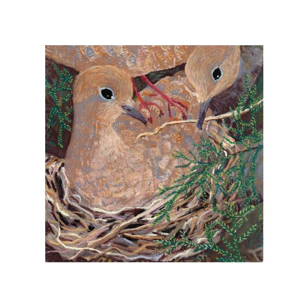 Mourning Doves Nesting in a Cedar, a pastel painting by Stephanie Thomas Berry