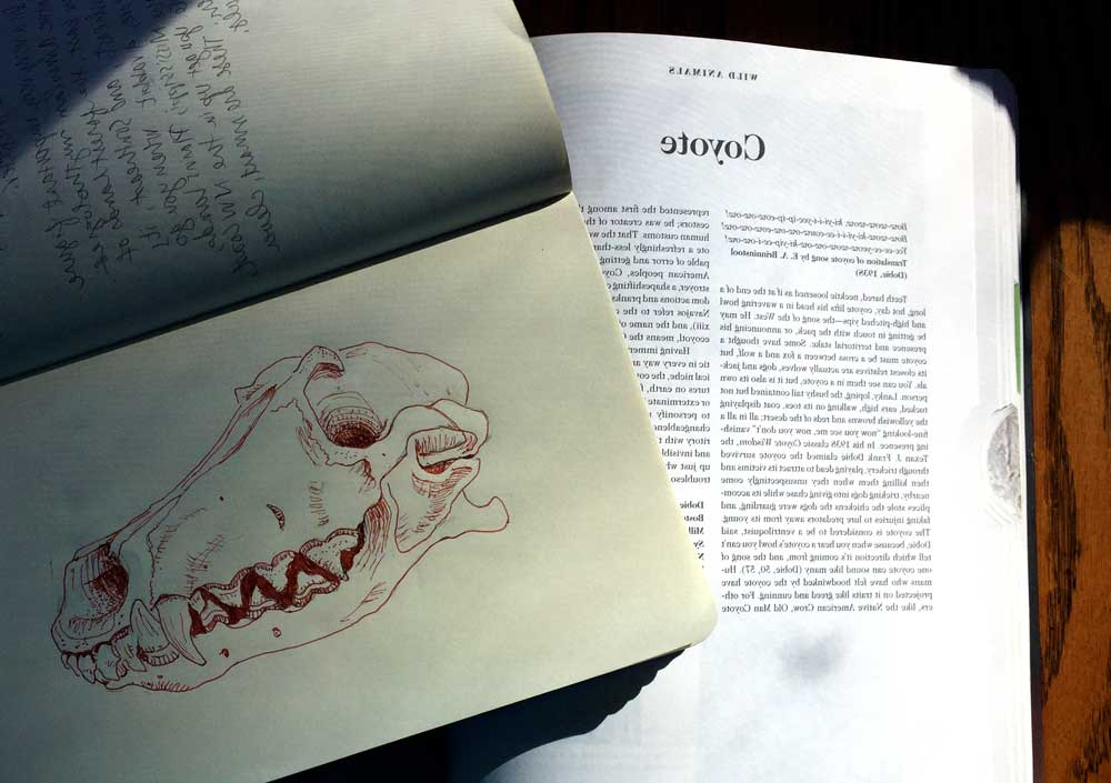 "Coyote Skull Sketch and Page from ""The Book of Symbols"""