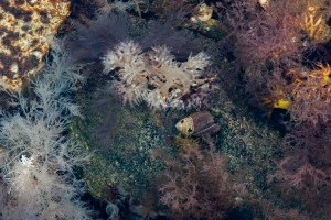 Underwater herbs in tidal pool