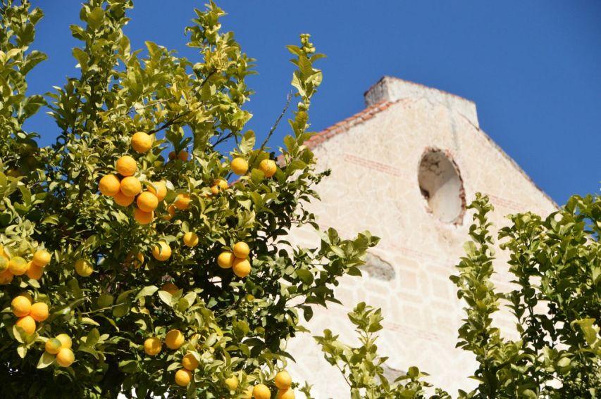 Appelsintræer foran Frigilianas sukkerrørsfabrik.