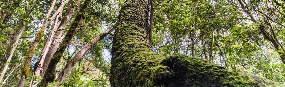 regenwald-header