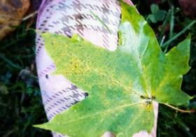 Осень под ногами…