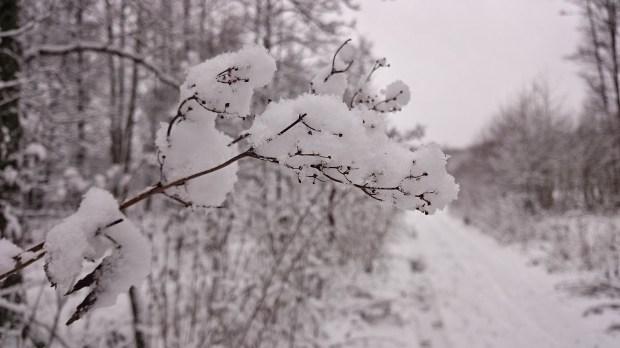 Снег в Стокгольме в феврале