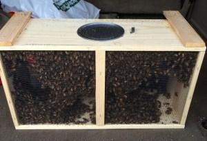 Box 'O Bees
