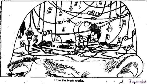 How the Brain Really Works