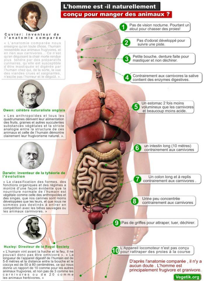 Vegan Attitude - Page 2 Homme-digestion.jpg?zoom=1