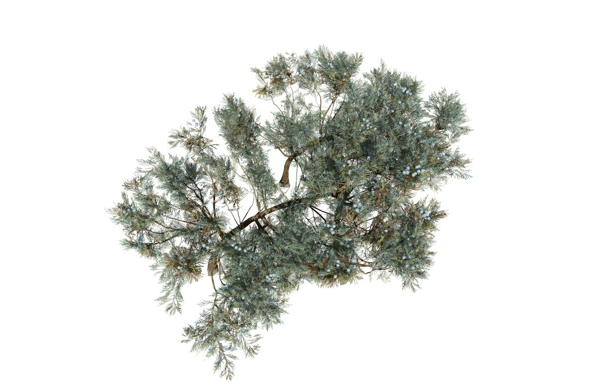 Picturesque Rocky Mountain Groundcover Rocky Mountain Groundcover Speedtree Juniper Ground Cover Care Juniper Ground Cover Types houzz-03 Juniper Ground Cover