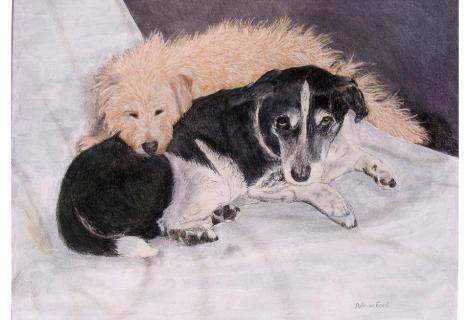 Still life with dogs