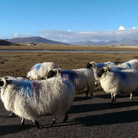 On Travel Writing and Stereotyping the Outer Hebrides