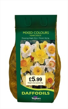 Taylors Bulbs DC60 Mixed Colour Daffodils available from Strawberry Garden Centre, Uttoxeter