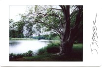Instant Photographs, Old Lyme Ct.