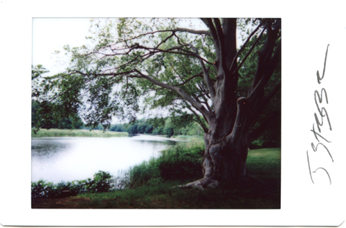 Instant photograph - Old Lyme, Ct. Ct. River- Strazza 1